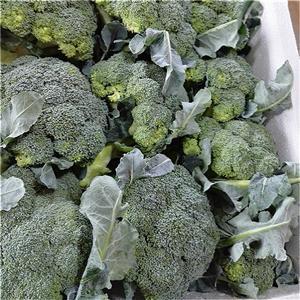 High quality Broccoli Quotes,China Broccoli Factory,Broccoli Purchasing