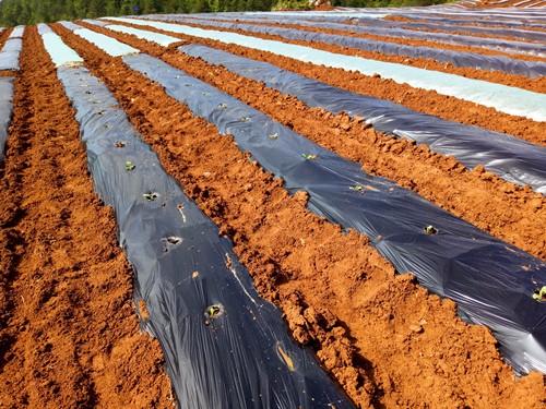 Herbicidal Mulch Films