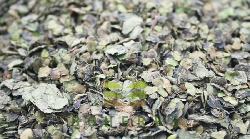 herba spirodelae (spirodela polyrrhiza) 004 .jpg