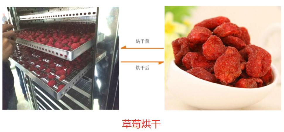 草莓烘干.png