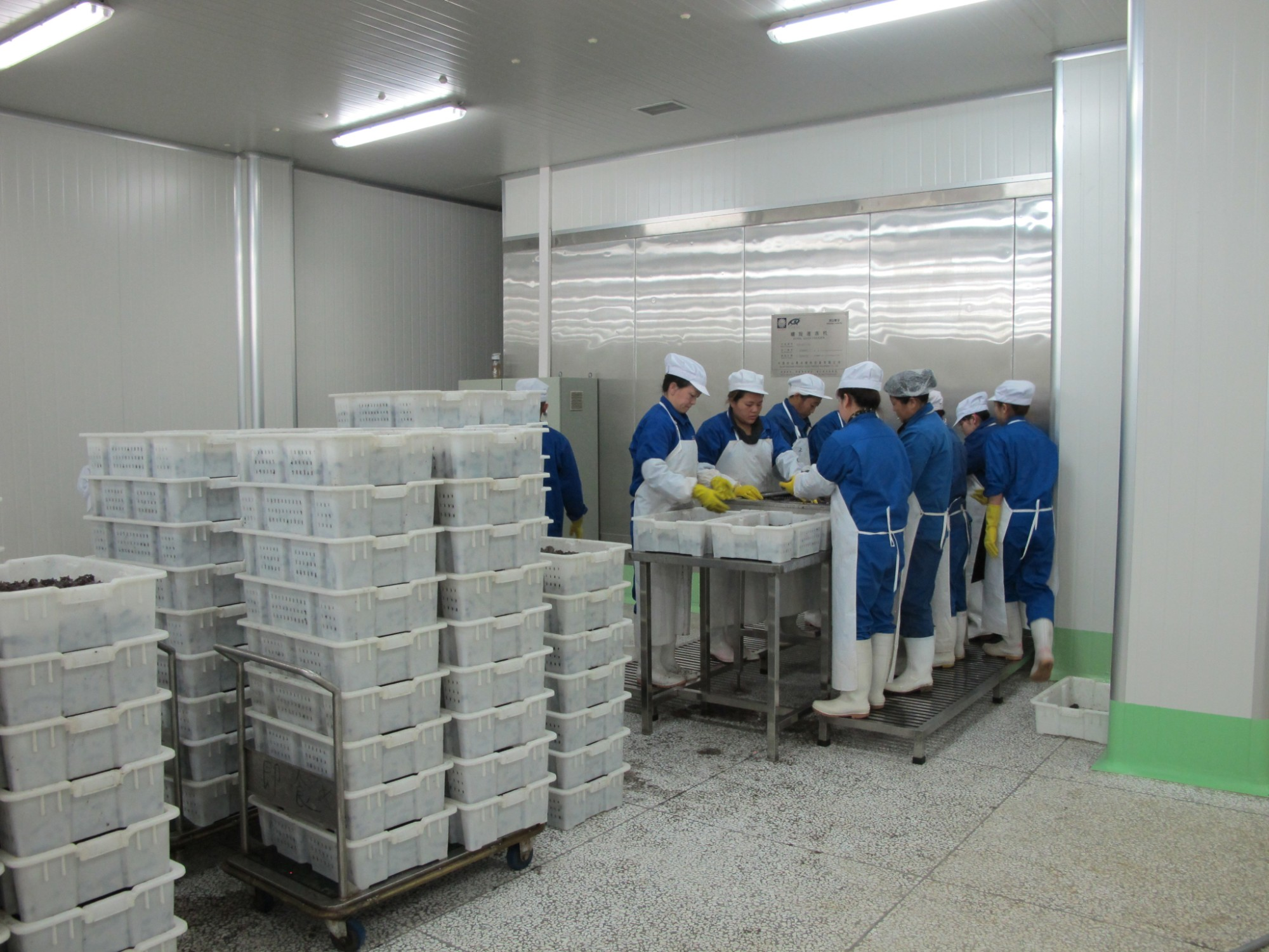 Competitive Price of Chinese BINGSHAN Spiral Freezer For Fish Fillet Manufacturers, Competitive Price of Chinese BINGSHAN Spiral Freezer For Fish Fillet Factory, Supply Competitive Price of Chinese BINGSHAN Spiral Freezer For Fish Fillet