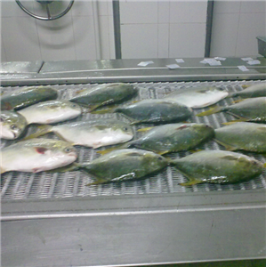Competitive Price of Chinese BINGSHAN Spiral Freezer For Fish Fillet