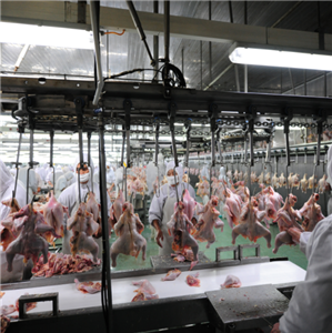 Chicken Slaughtering Processing Line