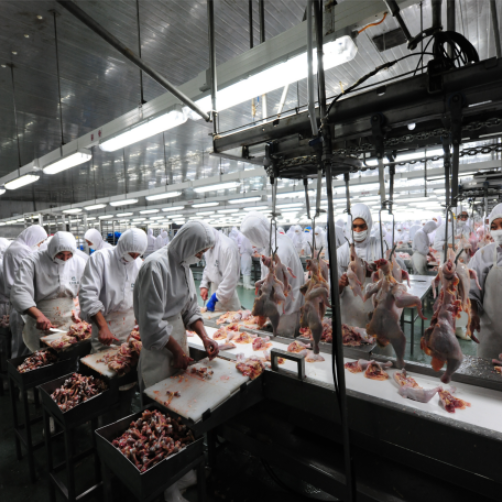 Philippines chicken slaughter production and meat processing line