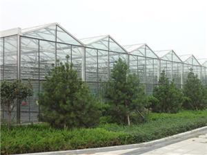 Venlo solar panel greenhouse