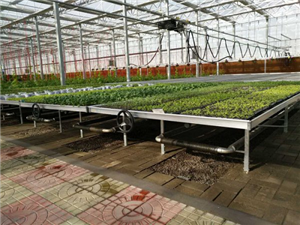 Vegetable Seedbed