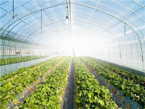 Ecological horticulture greenhouse