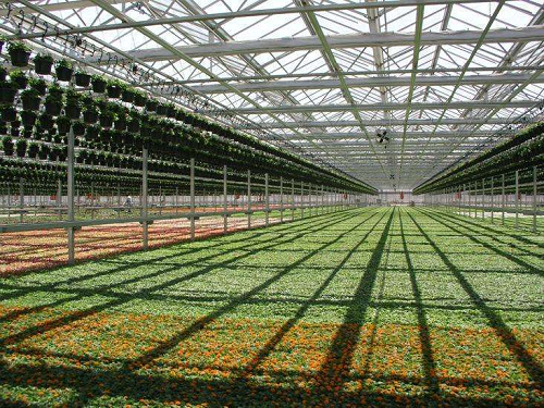The role of the greenhouse