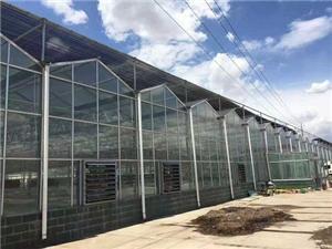 Solar panel multi-span greenhouse