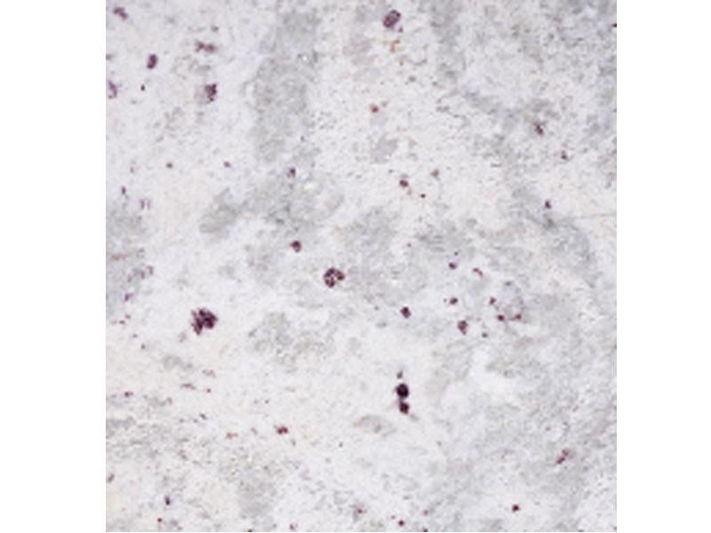 Андромеда белая гранитная плитка для столешницы