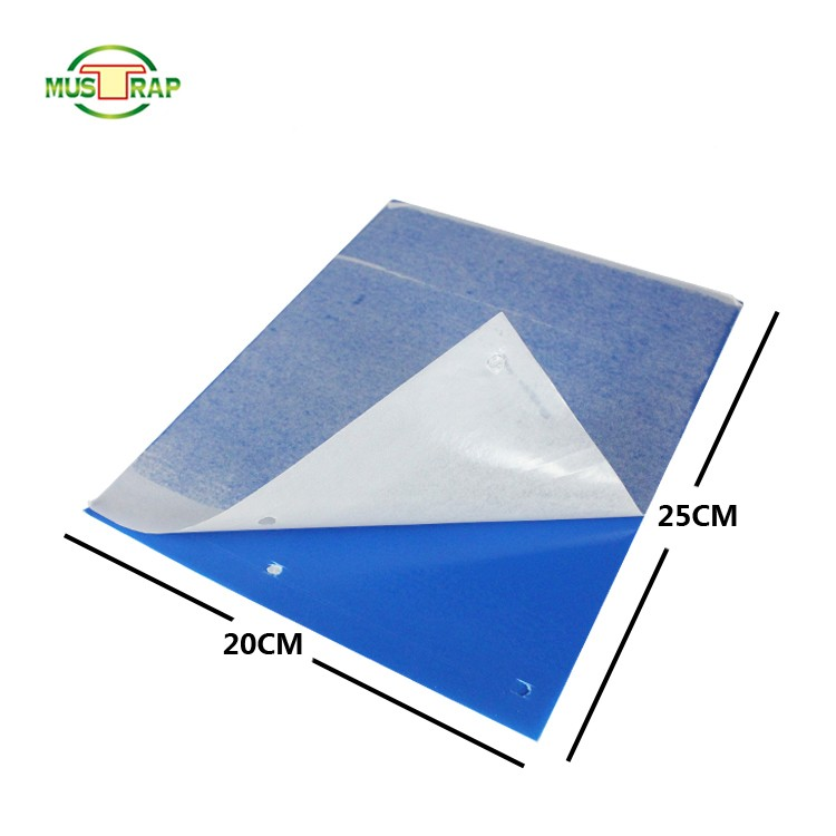 kitchen fruit fly trap Price, Cheap outdoor fruit fly trap, fly glue board trap Factory