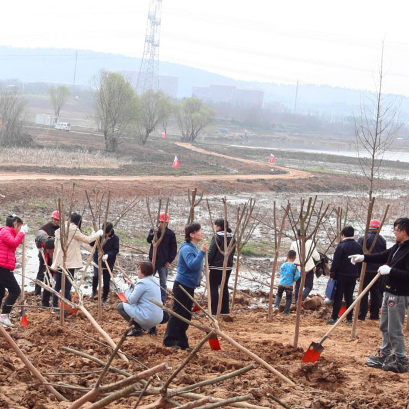 Tianjiu Machinery participated in the March 12th Arbor Day