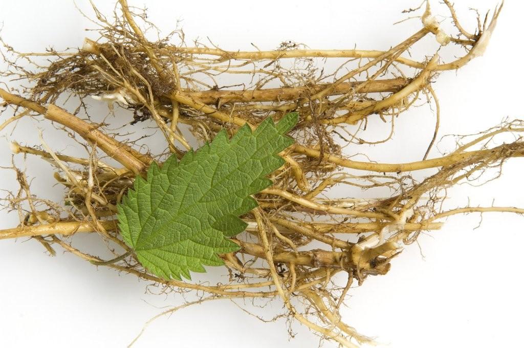 For Sport Nutrition Supplement 6,7-dihydroxybergamottin Cas 145414-76-2 Nettle Root Extract