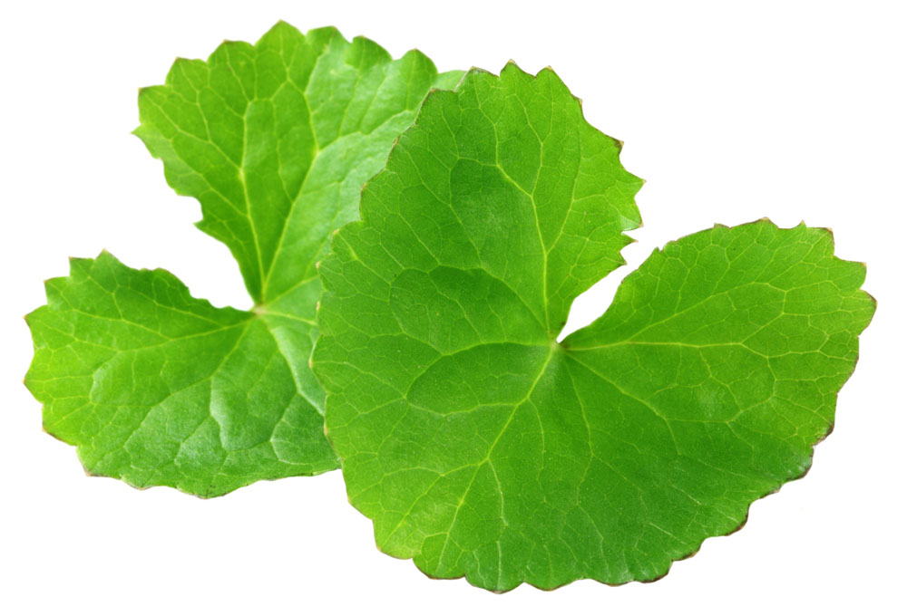 Natural Centella Asiatica Extract