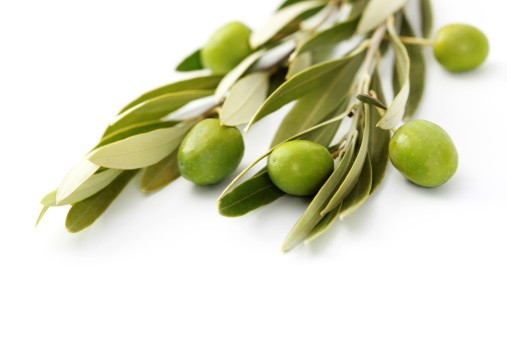 Weight Loss Olive Leaf Extract Oleuropein 15% 25% 50% CAS 32619-42-4