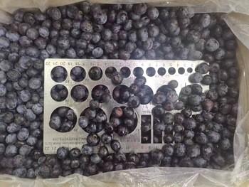 IQF Frozen Blueberry Manufacturers, IQF Frozen Blueberry Factory, Supply IQF Frozen Blueberry