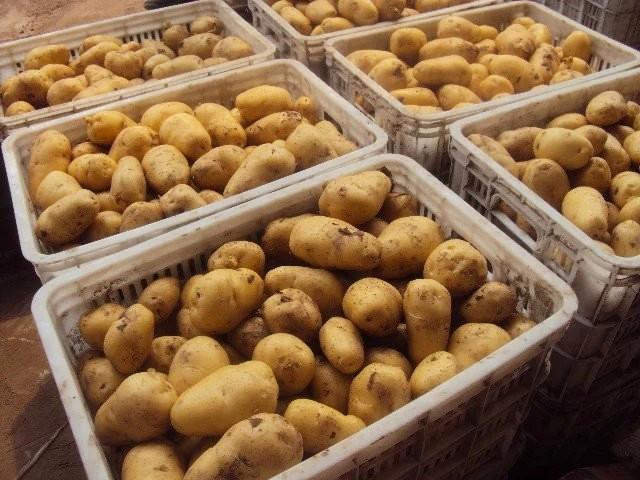 주문 신선한 감자,신선한 감자 가격,신선한 감자 브랜드,신선한 감자 제조업체,신선한 감자 인용,신선한 감자 회사,