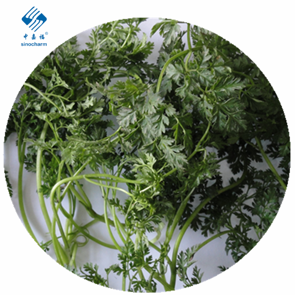 Frozen Parsley Manufacturers, Frozen Parsley Factory, Supply Frozen Parsley