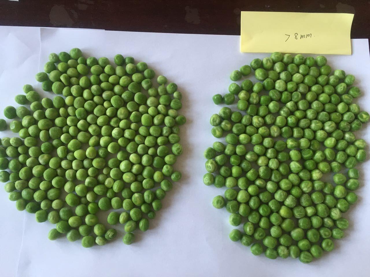 IQF Frozen Green Pea Manufacturers, IQF Frozen Green Pea Factory, Supply IQF Frozen Green Pea