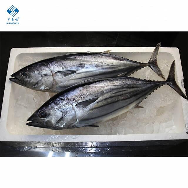 IQF замороженный тунец