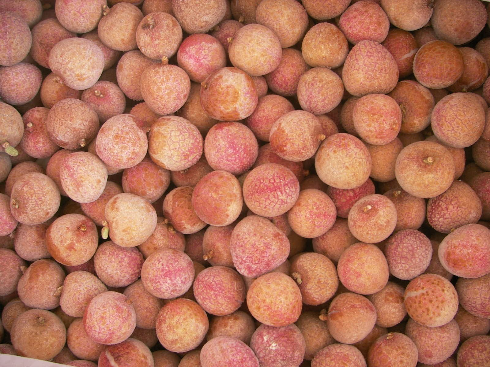 IQF Frozen Lychee Manufacturers, IQF Frozen Lychee Factory, Supply IQF Frozen Lychee