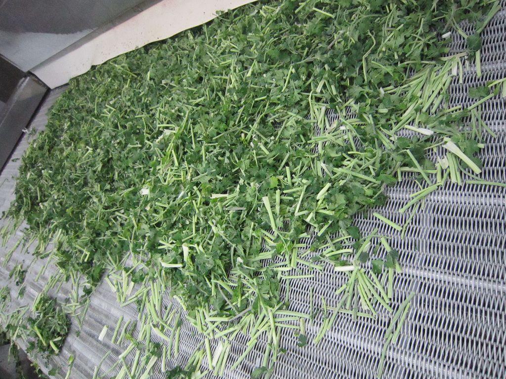 frozen white flower parsley