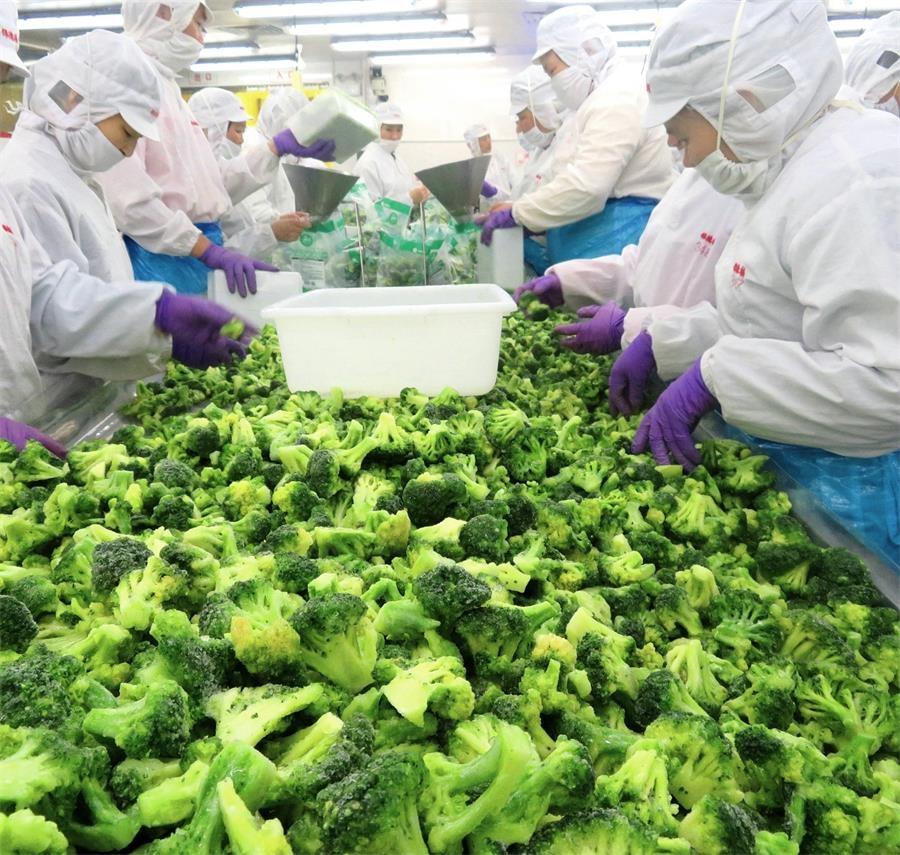 Flowchart of Frozen Broccoli