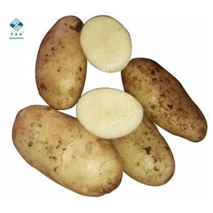 신선한 감자