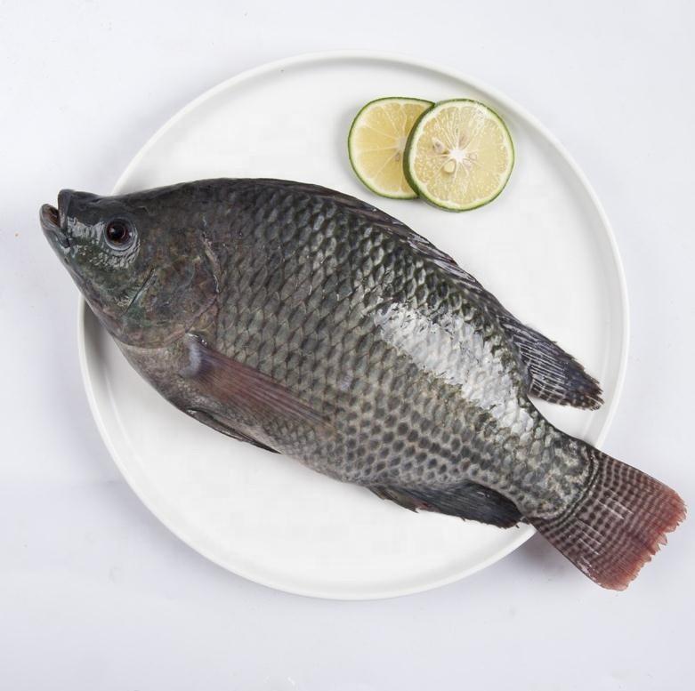 شراء IQF أسماك البلطي المجمدة ,IQF أسماك البلطي المجمدة الأسعار ·IQF أسماك البلطي المجمدة العلامات التجارية ,IQF أسماك البلطي المجمدة الصانع ,IQF أسماك البلطي المجمدة اقتباس ·IQF أسماك البلطي المجمدة الشركة
