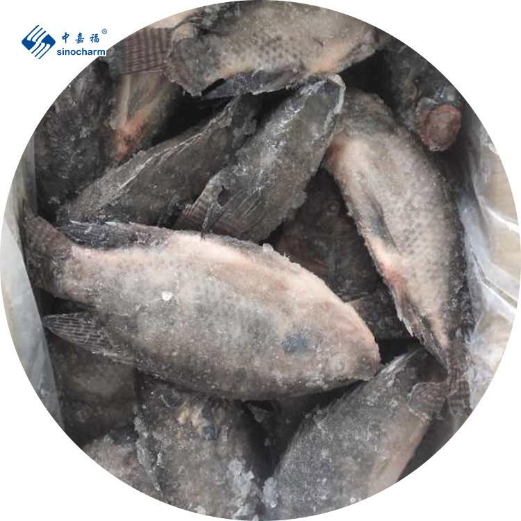 Замороженная рыба тилапия IQF