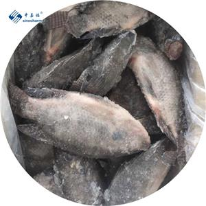 IQF أسماك البلطي المجمدة