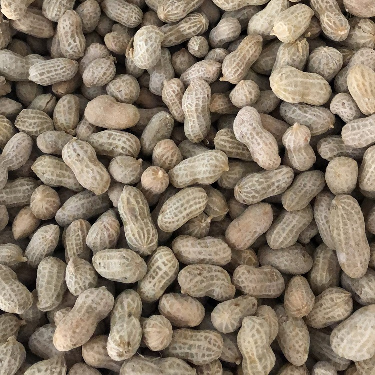 frozen cooked peanut