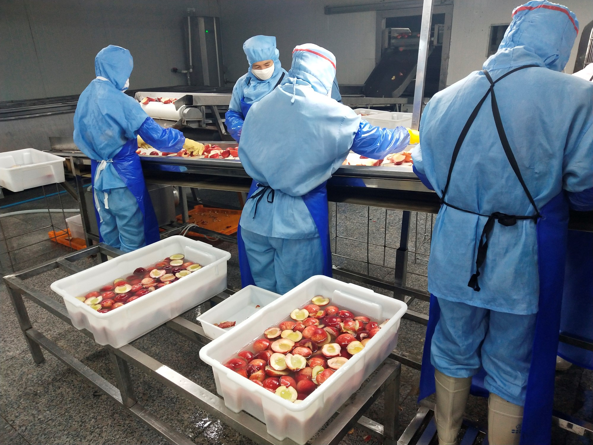 IQF Frozen Juicy Peach Manufacturers, IQF Frozen Juicy Peach Factory, Supply IQF Frozen Juicy Peach