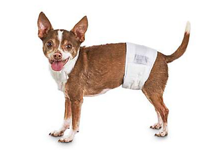 New Zealand: Dogs must wear Diapers in public places
