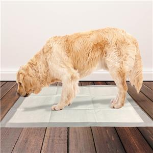 Clean Comfy Pet Dog Doggy Cat Disposable Dog Training Pee Pads