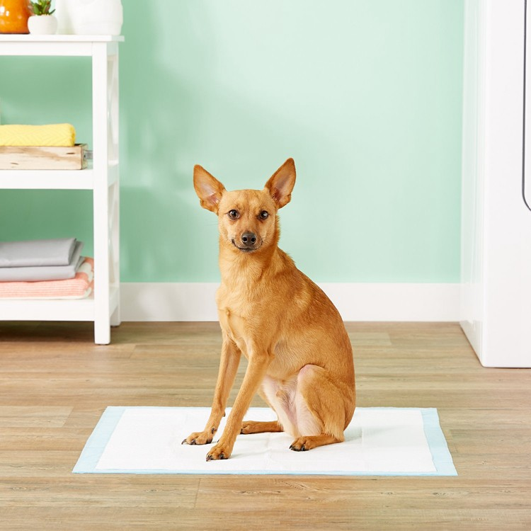 Pet Dog Training Pee Pad Diaper Disposable