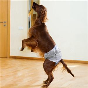 Pet Dog Disposable Diapers Wholesaler