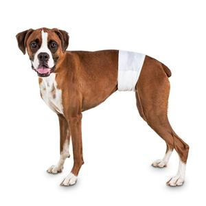 Disposable Dog Diapers For Dogs And Cats Dog Male Wraps Sanitary Pants