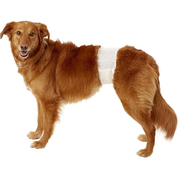 Fraldas descartáveis para cães de moda