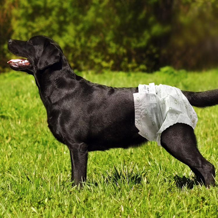 disposable male dog diapers