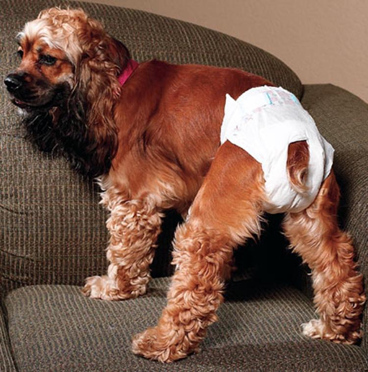 dog diapers walmart