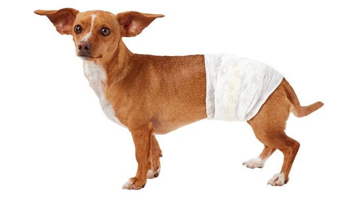 Male Pet Diaper
