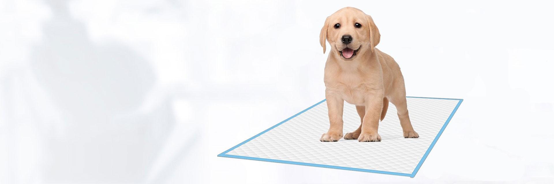 Almohadillas para mascotas Almohadillas de entrenamiento Almohadillas para pis
