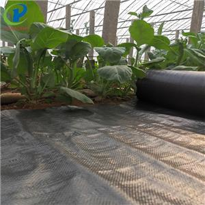 Vegetable Garden Weed Barrier Control Landscalpe Fabric