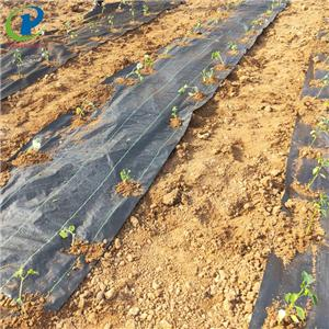 Professional Weed Control Landscape Fabric Amazon