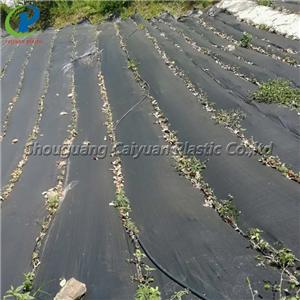 Black Types Of Weed Control Landscape Fabric Home Bargains