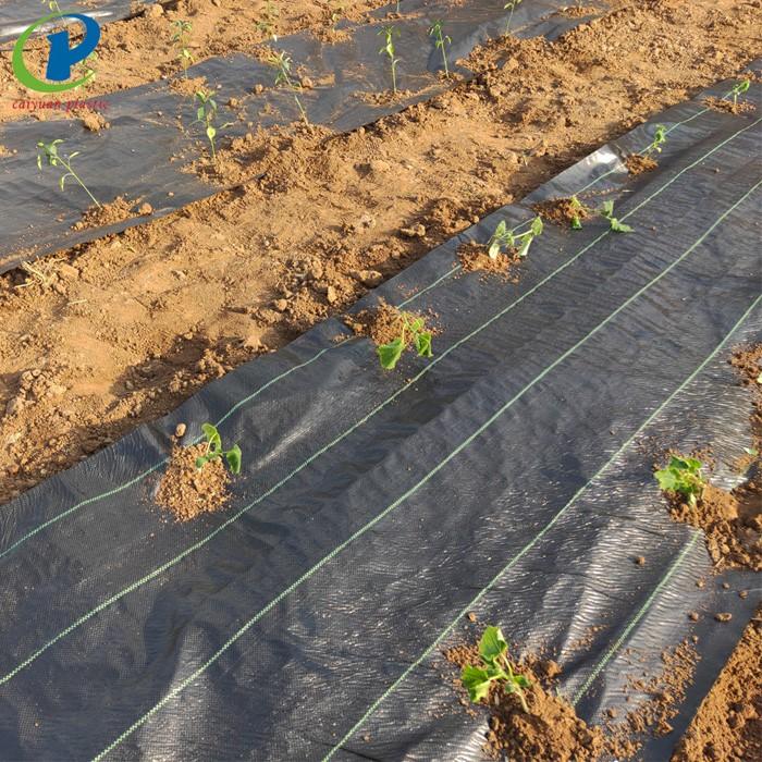 Rumpai Barrier Landscape Fabric Staples