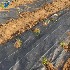 Weed Barrier Landscape Fabric Staples