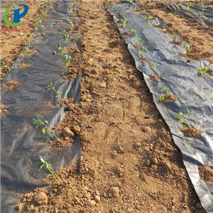 Borong Landskap Fabirc Roll Dengan Hole