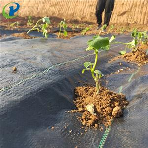 Biodegradable Plastic Mulch Film